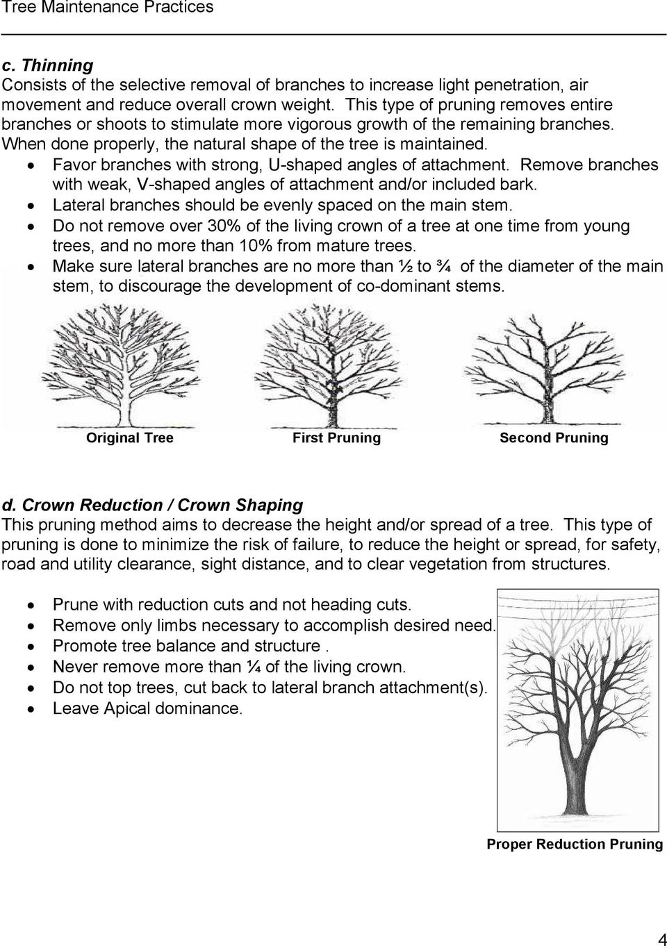 Favor branches with strong, U-shaped angles of attachment. Remove branches with weak, V-shaped angles of attachment and/or included bark. Lateral branches should be evenly spaced on the main stem.