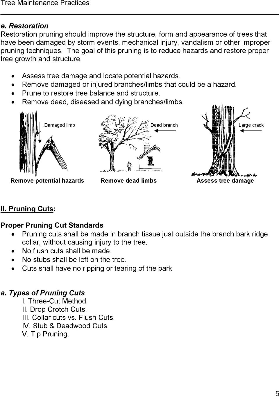 Remove damaged or injured branches/limbs that could be a hazard. Prune to restore tree balance and structure. Remove dead, diseased and dying branches/limbs.