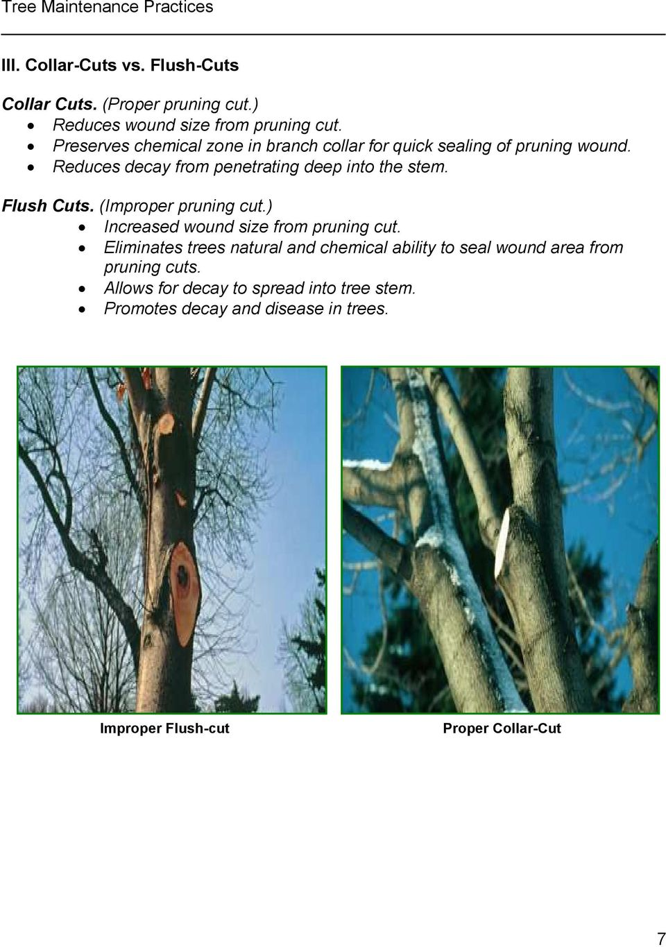 Flush Cuts. (Improper pruning cut.) Increased wound size from pruning cut.
