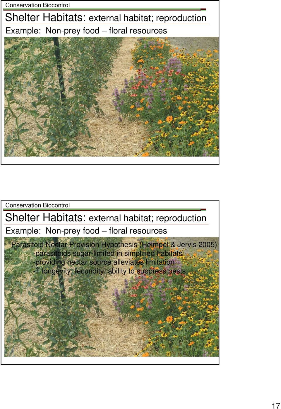 Hypothesis (Heimpel & Jervis 2005) -parasitoids sugar-limited in simplified habitats