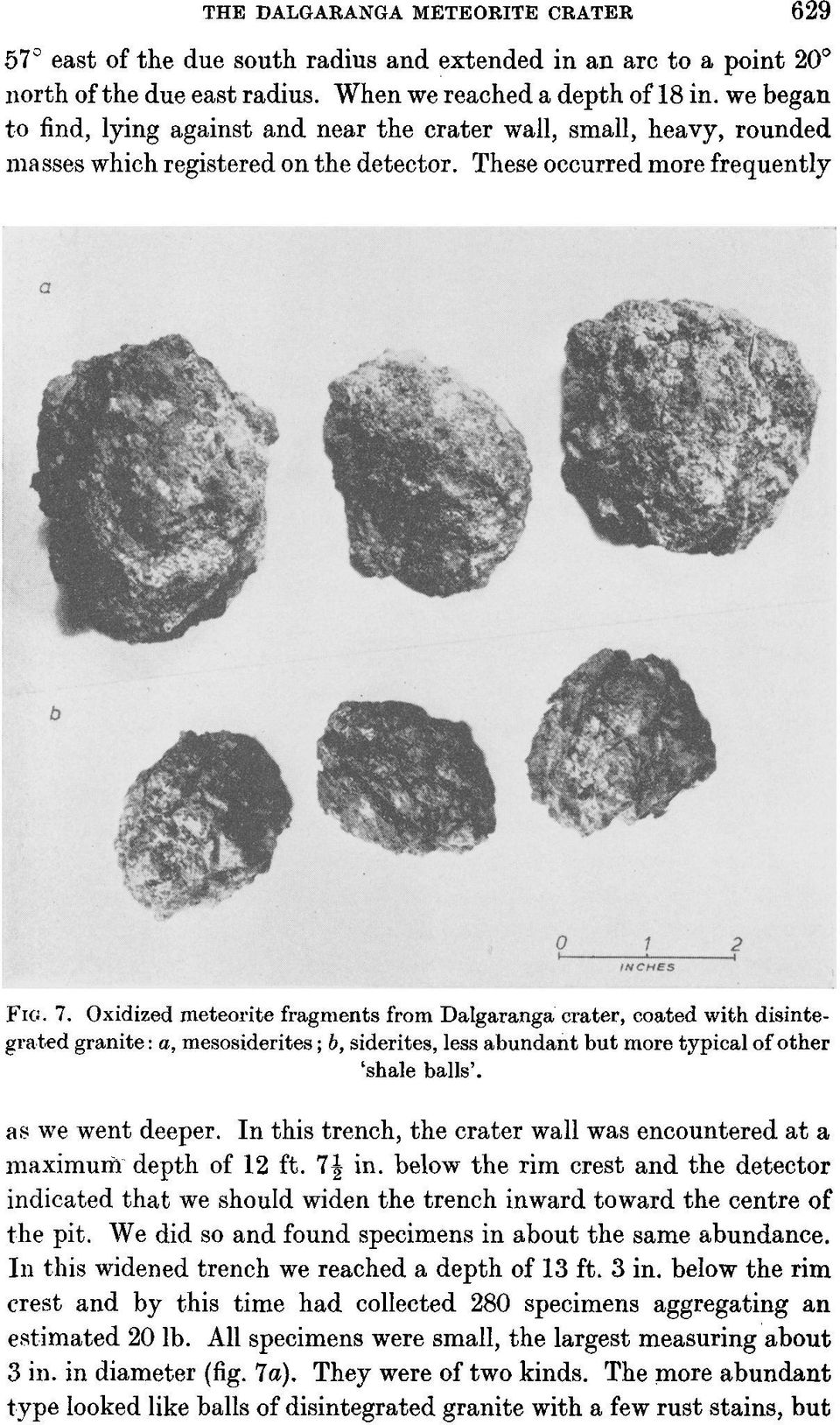 Some of the specimens showed only plessite in the sections polished, and others showed no plessite whatever. The prominence of taenite varied greatly from specimen to specimen.