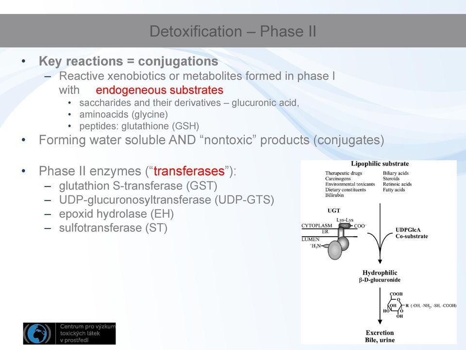 glutathione (GSH) Forming water soluble AND nontoxic products (conjugates) Phase II enzymes ( transferases ):