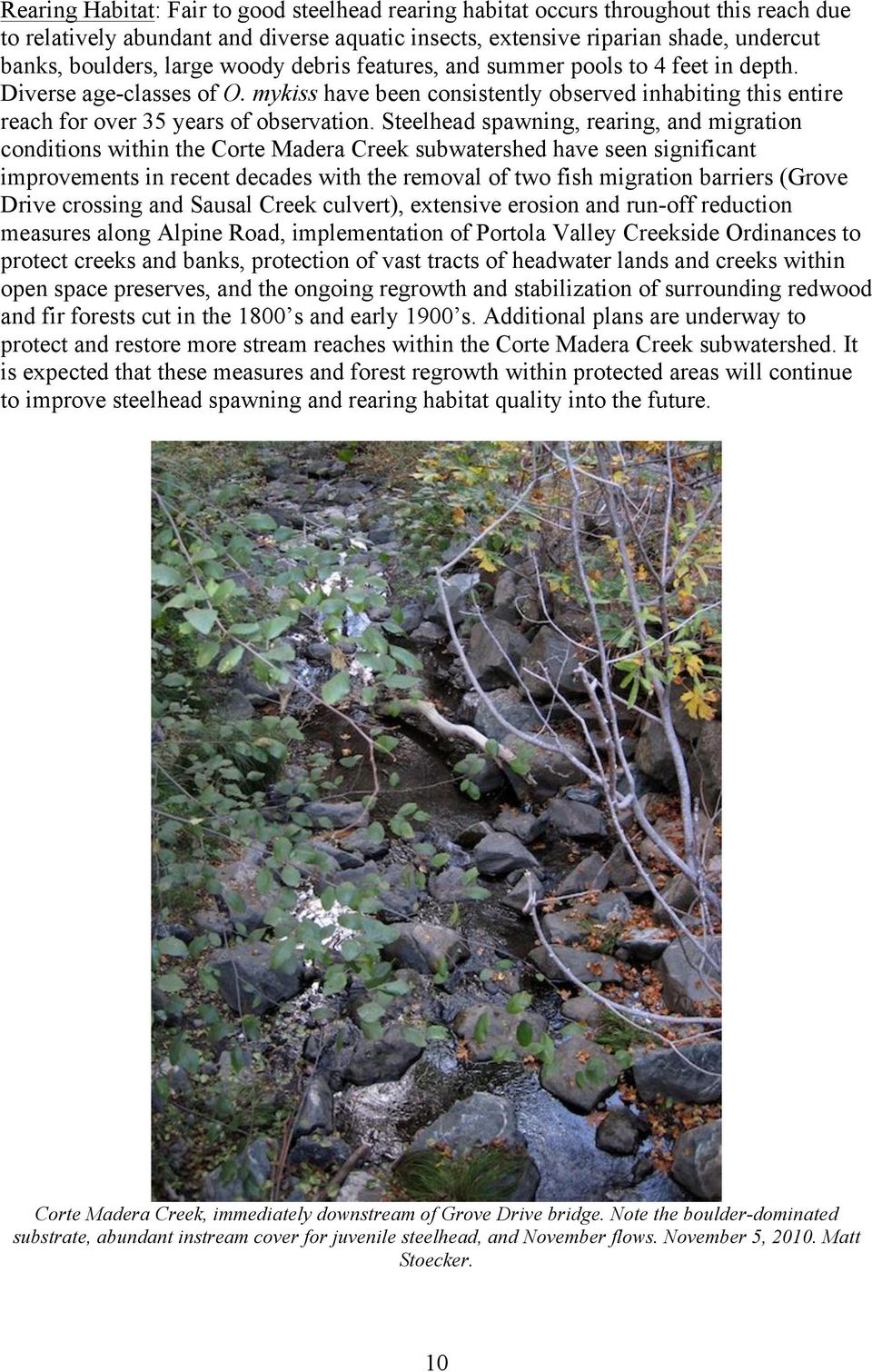 Steelhead spawning, rearing, and migration conditions within the Corte Madera Creek subwatershed have seen significant improvements in recent decades with the removal of two fish migration barriers