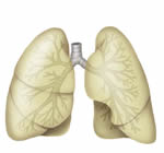 lungs the organs of an animal s body used for breathing air You and I have lungs in our chest for breathing.