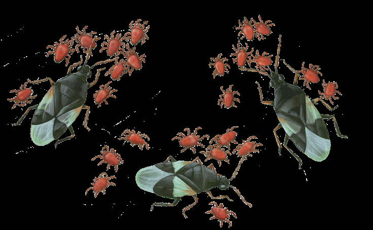 Multiplying Numbers 3 pirate bugs x 8 mites each = how many mites? You could count each mite to get the answer.