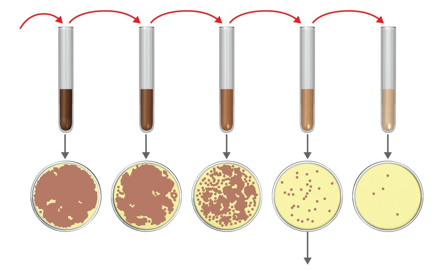 Direct Measurements of Microbial Growth Viable cell counts: Plate