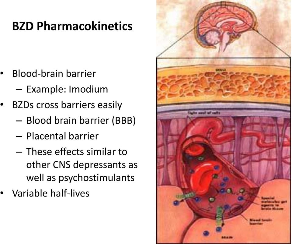 (BBB) Placental barrier These effects similar to other