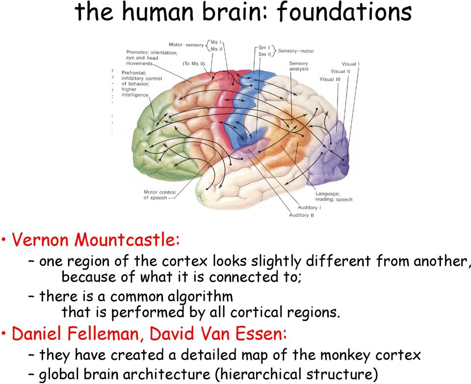 that is performed by all cortical regions.