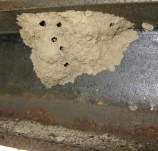 Many types Common ones in our area: black and yellow, organ-pipe, and blue mud daubers Overwinter as immatures in the nest and emerge in spring to mate and build colonies.