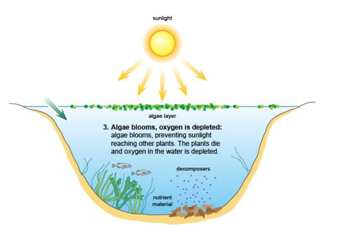 Increases in temperature can change aquatic plants.. As the temperature increases, the rate of photosynthesis increases.