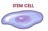 Gene Expression Cell