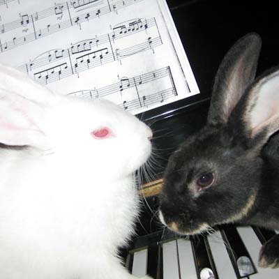 1 BUNNY WORLD FOUNDATION ADOPTION AGREEMENT 1) I, me and my hereinafter refers to (name of person adopting a bunny).