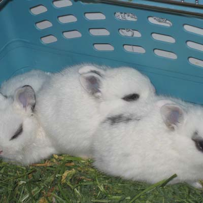 4 BWF ADOPTION INFORMATION The following information is requested so that we can assist you in the selection of a house rabbit companion.