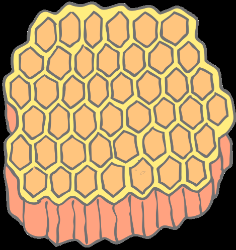 Where does beeswax come from? After the nectar is changed to honey the bees seal each honeycomb cell with wax.