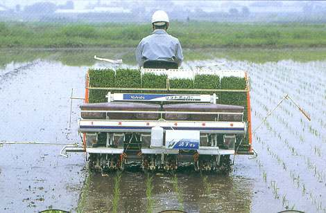Development of machine TR Washed seedling transplanting by machine