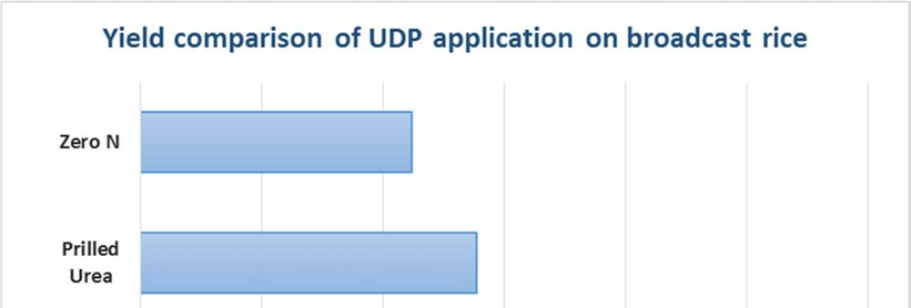 Figure 5. Yield Comparison of UDP Application on Broadcast Rice Plant height: Plant growth was remarkably superior from the earliest stage of growth in UDP before sowing (Treatment 1).