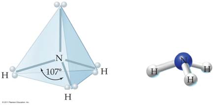 Trigonal Pyramidal Molecules In ammonia, NH 3, the central nitrogen atom is surrounded by three bonding pairs and one