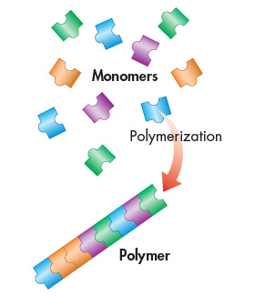 o The monomers in a polymer may be identical or different.