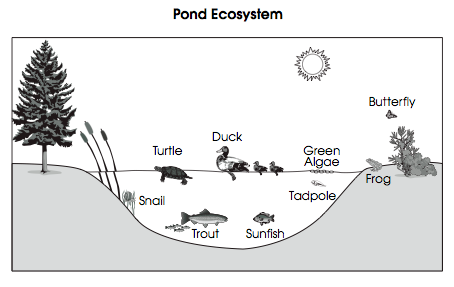 Use the following information to answer questions 17-19. The picture shows a pond ecosystem. Many plants and animals live in and around the pond. 17. Many organisms have adaptations.