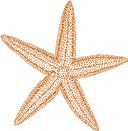 Star Observations Creature Comparison At the SEA LIFE Orlando Rockpool, you will have the opportunity to meet some of our amazing