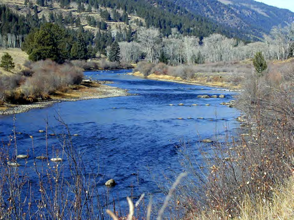 However, rainbow trout populations have been increasing at most sites since 2008 which is when Colorado Parks and Wildlife switched to the stocking of whirling disease resistant rainbow trout.