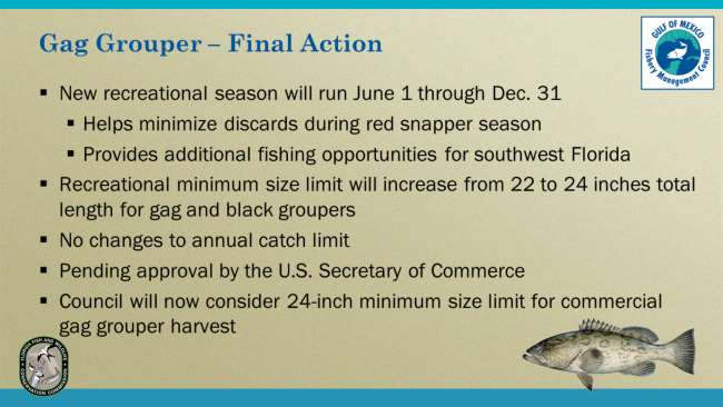 The Council approved new management measures for the gag grouper fishery. The new recreational season would run June 1 through Dec. 31.