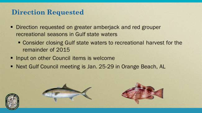 Staff requests direction on Gulf greater amberjack and red grouper.