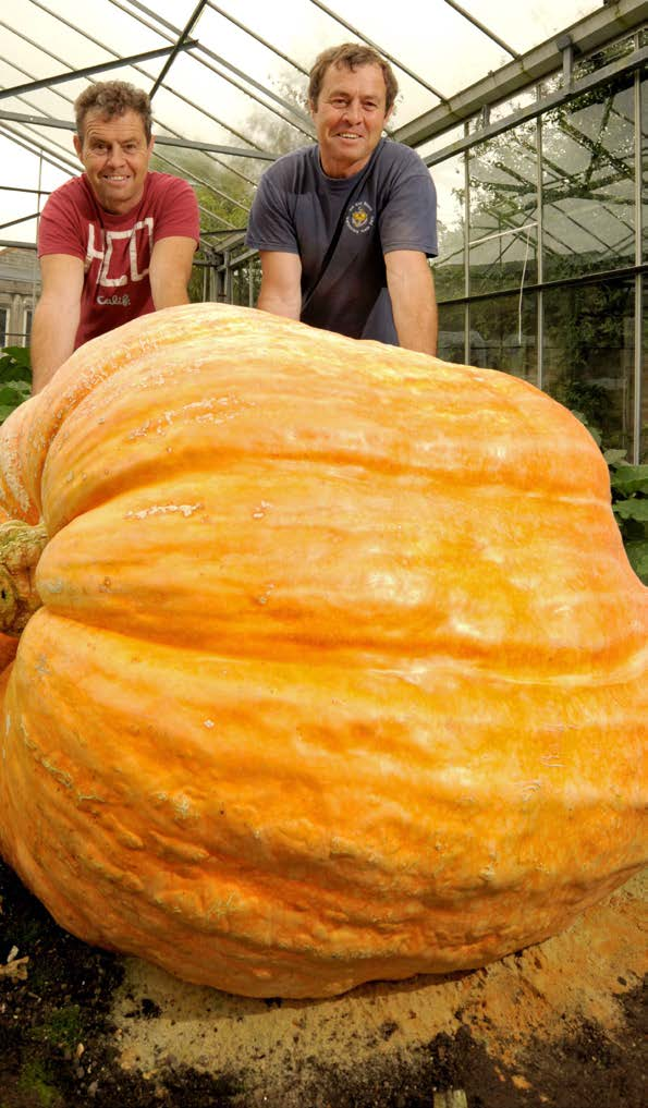 Giant Pumpkins A Reading A Z Level