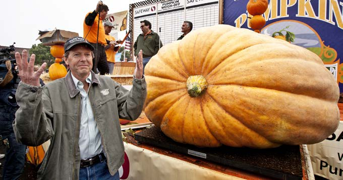 People all over the world have taken up the hobby of growing giant pumpkins. Growers compete against one another, hoping to break the record for the world s biggest pumpkin.
