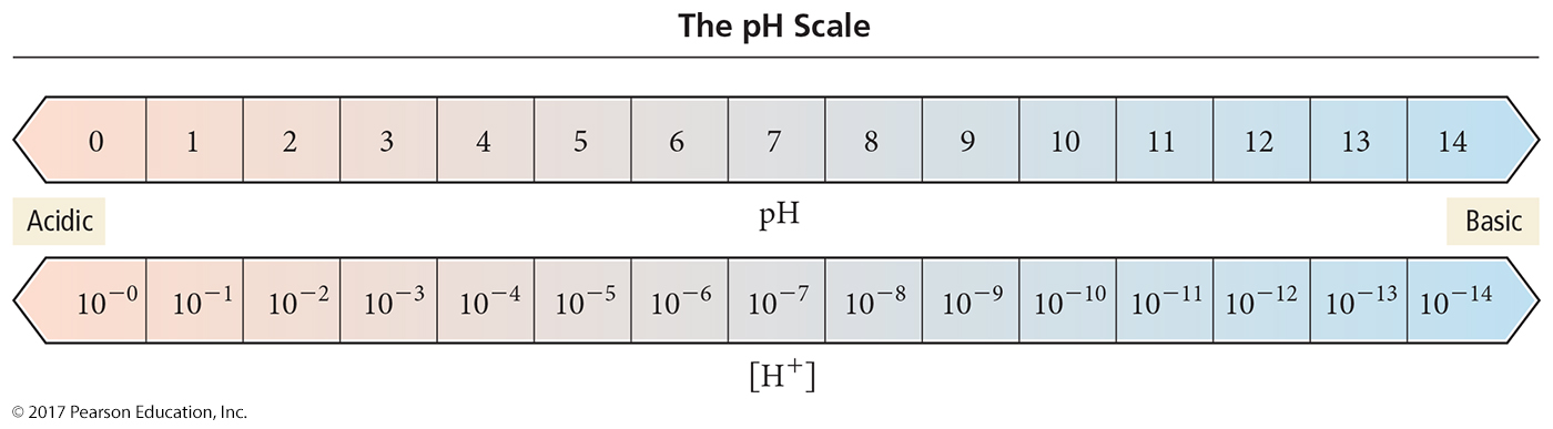 ph scale Pure water: ph = 7 Acidic solution: ph < 7 (poh > 7) Basic solution: ph > 7 (poh <