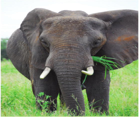 Animals have different body parts that help them eat. Elephants have trunks that help them pick up food.