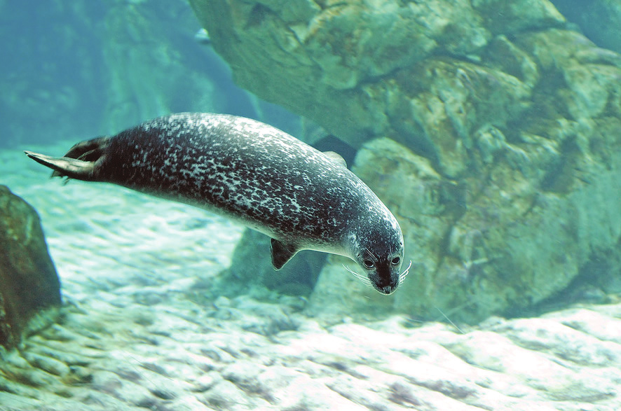 Their flippers help them swim through the water. try now With a partner, make a list of ways that animals can move.