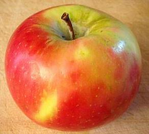 Honeycrisp Maturity: grouped by titratable acidity lots TA % starch (1-6) SSC % color (1-5)