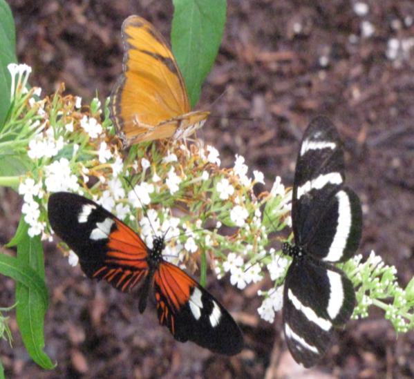Butterfly Wonderland provides generous resources for the butterflies and moths to locate nourishment. Butterflies are considered to be pollinators.