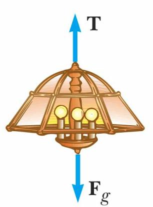 Equilibrium, Example 1a A lamp is suspended from a chain of negligible mass The forces acting on the lamp are the force of gravity (F g ) the tension in the chain (T) Equilibrium gives Equilibrium,