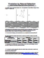 Evolution and selection pogil biology answer key pdf and yetterscience and yetterscience feb 25 2014 in this activity we will explore fandeluxe Images