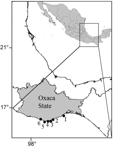 A Progress On Ostreopsis Physiological Ecology Phylogeny