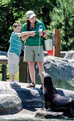 Career For-A-Day Programs Junior Sea Lion Trainer For participants ages 10 to adult Become a Junior Trainer at Sea Lion Sound!