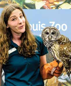 Summer Outreach Programs Let the Saint Louis Zoo Come to You! While we re always happy to have groups come to the Zoo for a program, we know it is not always possible.