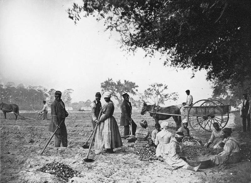 The Bureau settled thousands of freed men and women on plantations that owners had abandoned or that the army had seized.