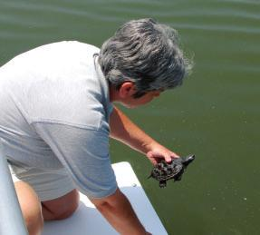 On a spring day in 2009, April found a baby terrapin scooting along on the concrete sidewalk of the Piney Point Lighthouse Museum.