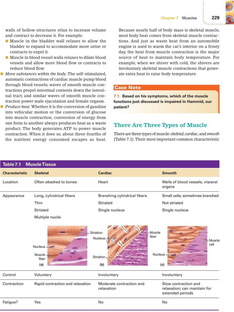 7muscles Major Themes Chapter Objectives Overview Of Muscle 228