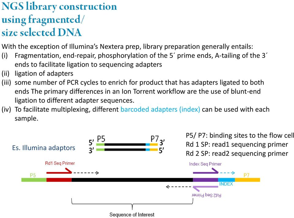 The primary differences in an Ion Torrent workflow are the use of blunt-end ligation to different adapter sequences.