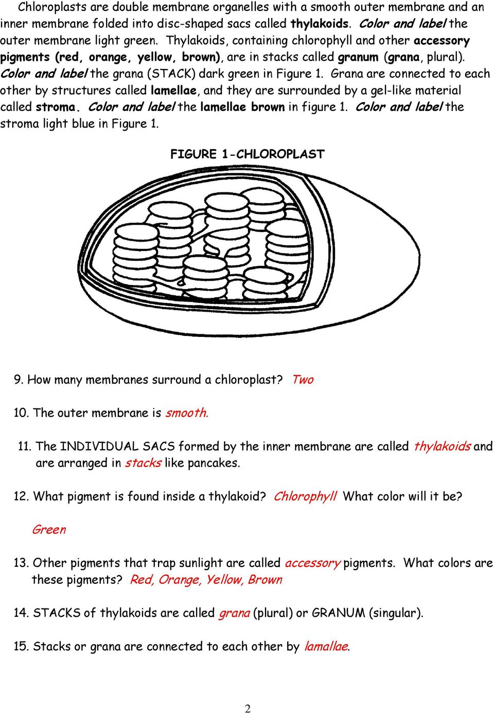 Chloroplasts And Mitochondria Pdf