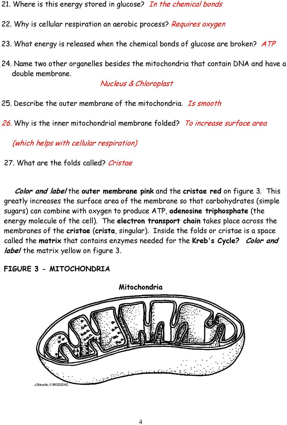 Mitochondria diagram with labels worksheet introduction to chloroplasts and mitochondria pdf rh docplayer net cell diagram detailed mitochondria diagram ccuart Images