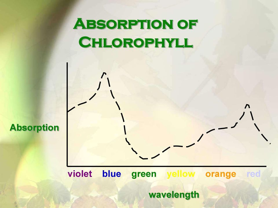 Absorption violet