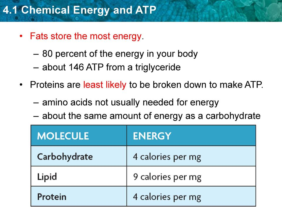 triglyceride Proteins are least likely to be broken down to make ATP.