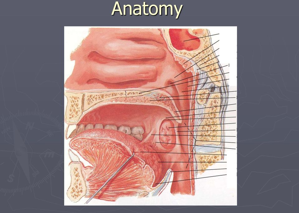 Special Situations In Management Of Tonsil And Adenoid Disorders Pdf