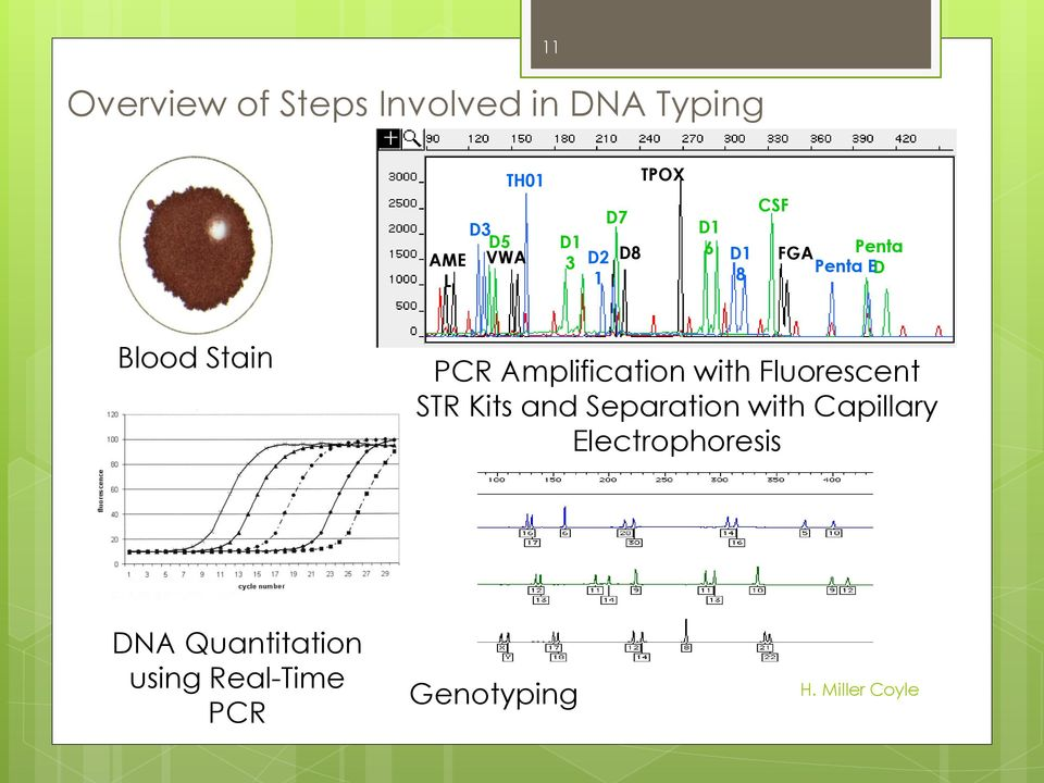PCR Amplification with Fluorescent STR Kits and Separation with
