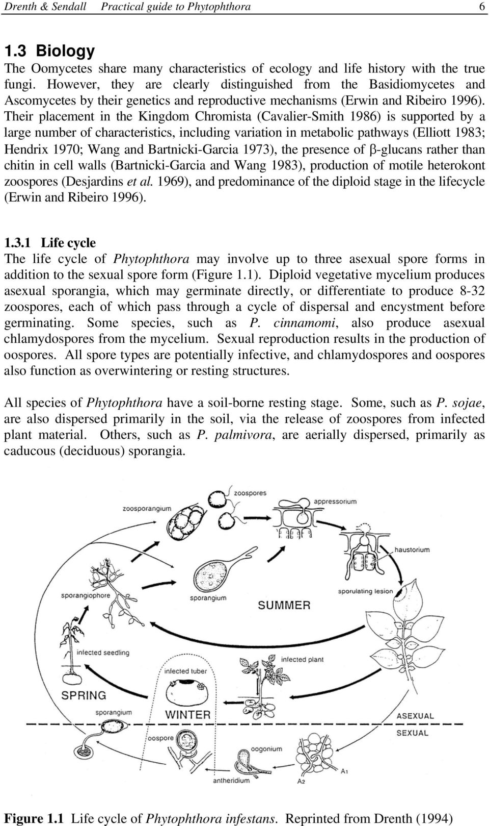 Sexual life cycle phytophthora infestans